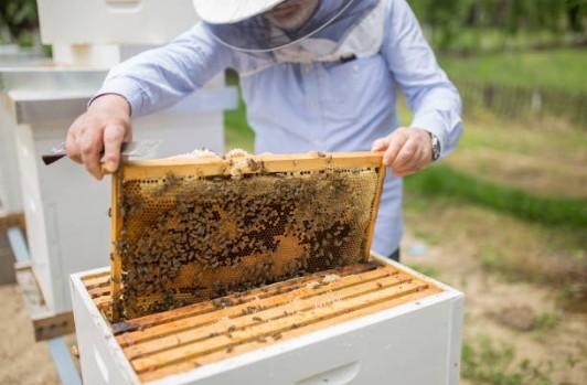 ruche-apiculture-abeille