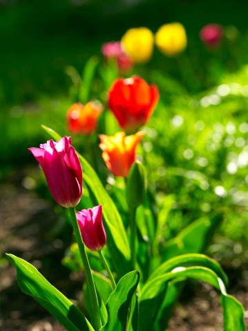 Jardin : les préparations pour le printemps