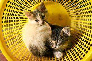 deux-chats-cohabitation