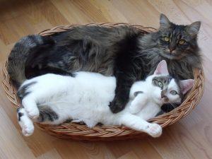 avoir-deux-chats