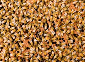 Désinsectisation abeilles