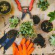 jardinage-printemps-apres-hiver-outils-terre-jardin